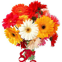 12 Gerberas Bouquet