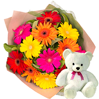 12 Gerberas Bouquet with Teddy bear